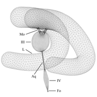 Computational modeling of the mechanical behavior of the cerebrospinal fluid system