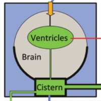 Assessment of intracranial dynamics in hydrocephalus: effects of viscoelasticity on the outcome of infusion tests.