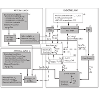 Computational modeling of coupled blood-wall mass transport of LDL: Effects of local wall shear stress.