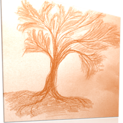 Capillary effects: from garden to lab applications